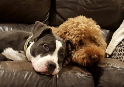 #twinning #2dogs #multipledogtraining, #siblingrivalry, #dogsofbarkbusters