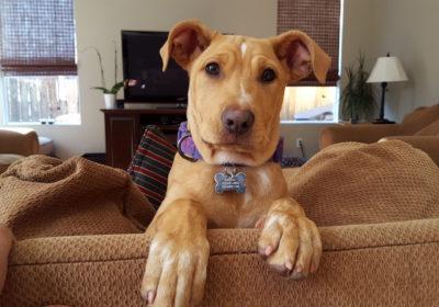 #lovethisdog #dogfun #obedientdogs #dogchewing #dogsofbarkbusters