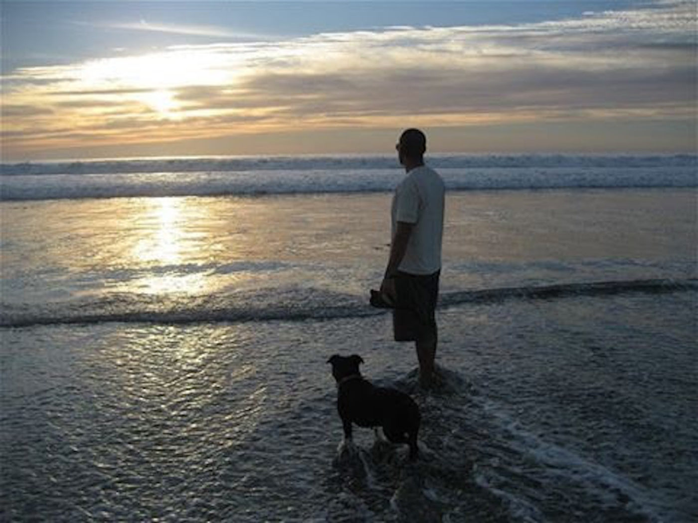 #dogatbeach, #sandiegodogtrainer #cutedogs #pittielove