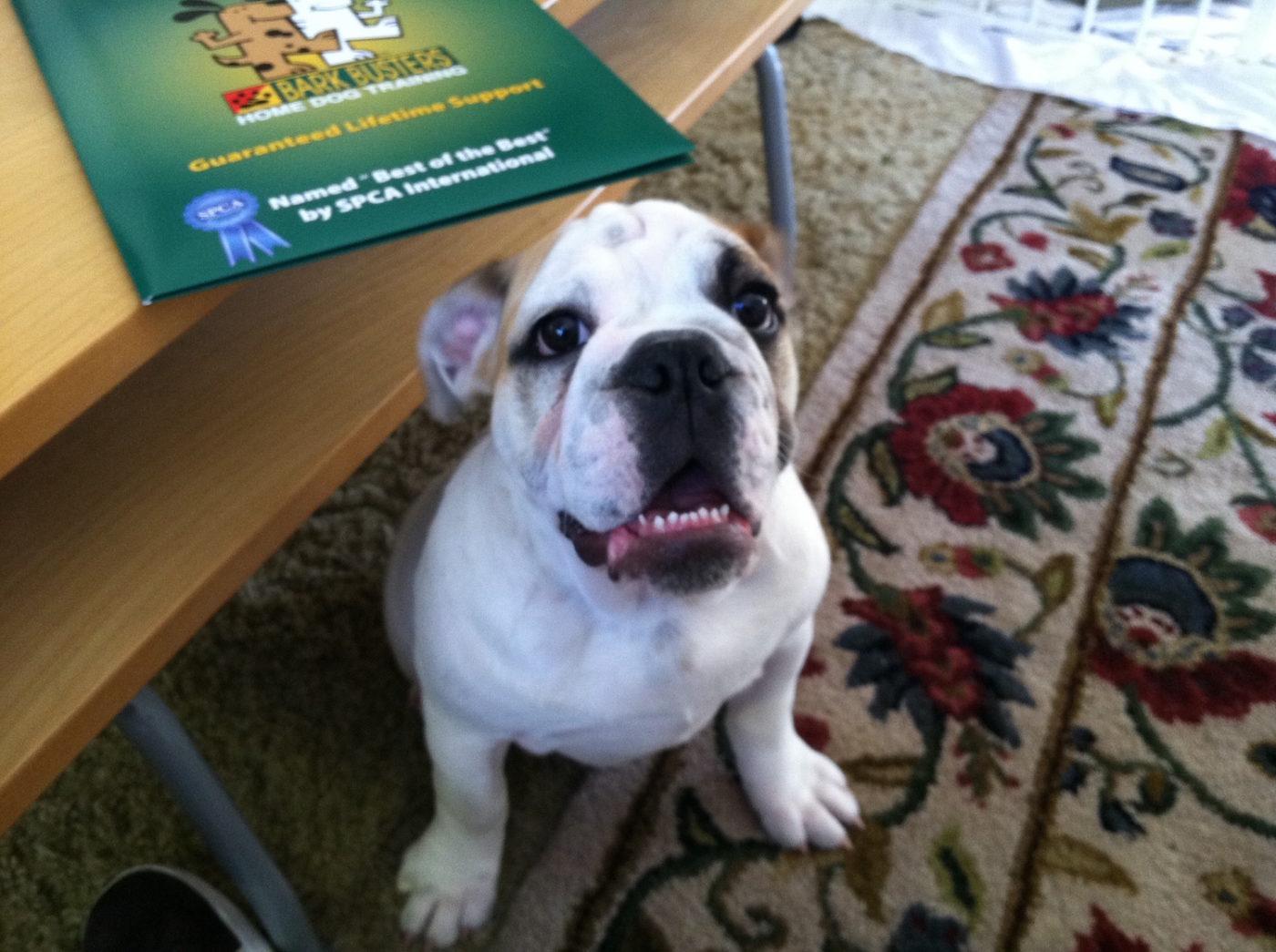 #dogobediencetraining, #basicdogobedience, #puppytraining