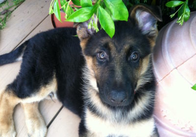 #mesmerizingeyes, #obedientdog, #topdogtrainer, #sandiegodogtraining