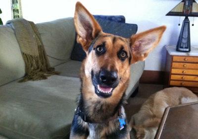 #lovethoseears, #localdogtraining, #sandiegodogtrainer