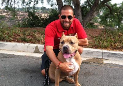 Justin Scher, BarkBustershomedogtraining, mixedbreedtraining