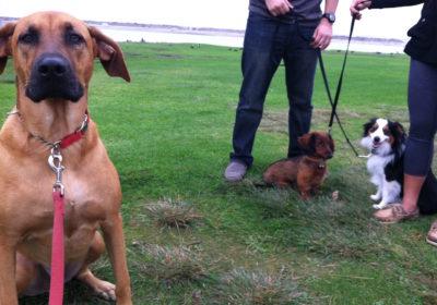 #dogpark, #dogtrainer, #bestdogtraining, #dogtrainingnearme