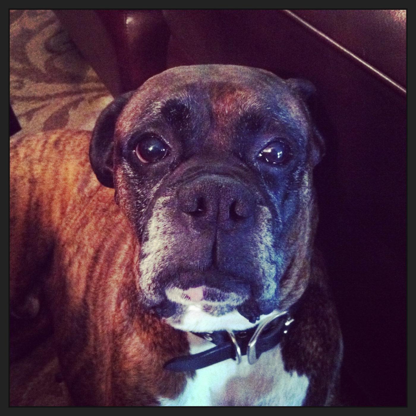 #sandiegodogs, #dogsarelove #largedogtraining, dogsofbarkbusters