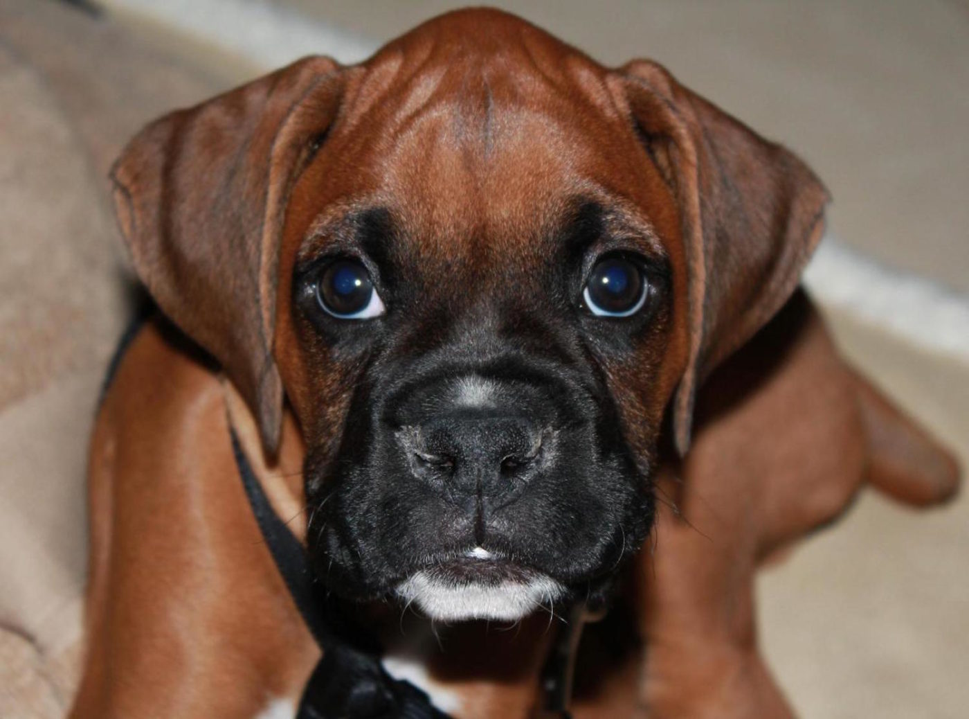 cute puppy, top puppy training, obedient puppy, Bark Busters San Diego