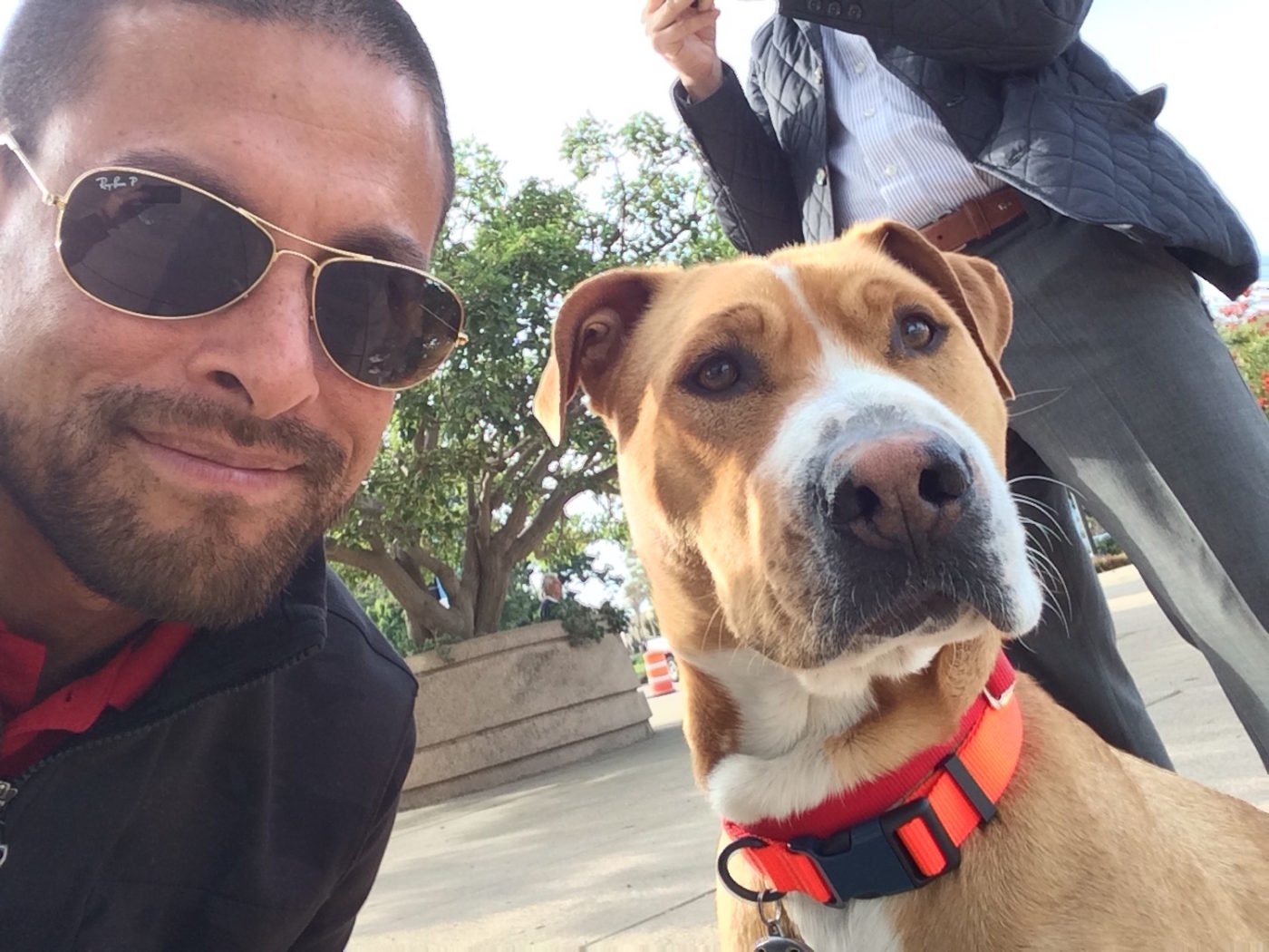 #cute #dogs #dogfriendly #positivedogtraining #BarkBustersHomeDogTrainingSanDiego