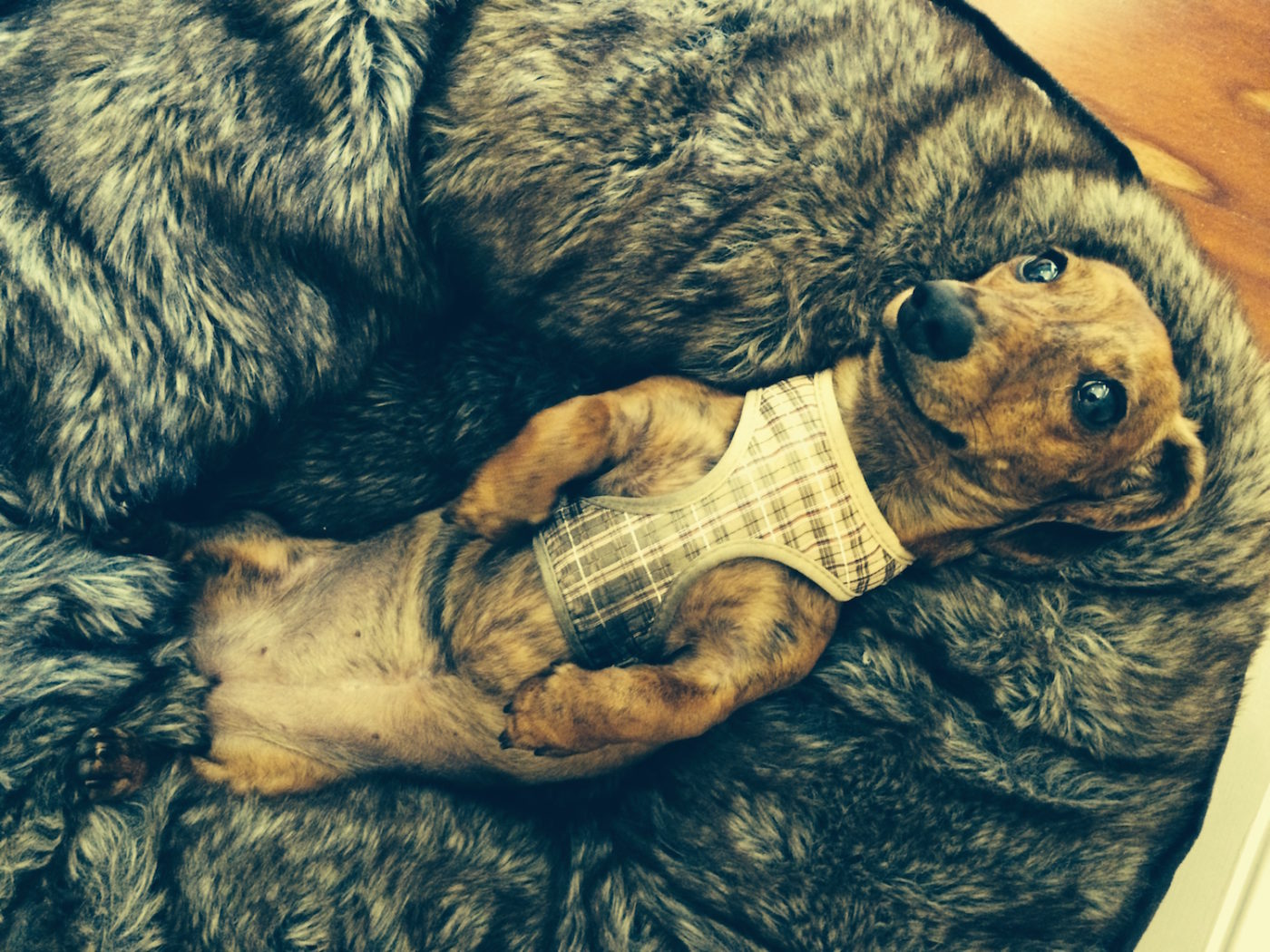 #dogchilling #dogrelaxedaftertraining, #topdogtraining, #dogsofbarkbusters