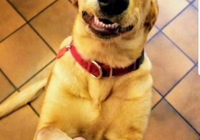 mixedbreed, BarkBustershomedogtraining, SanDiego dogs