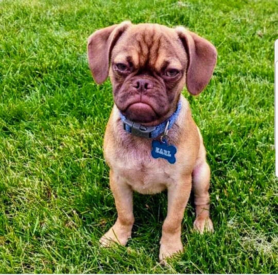 #dogtraining, #puppytraining, #housebreaking
