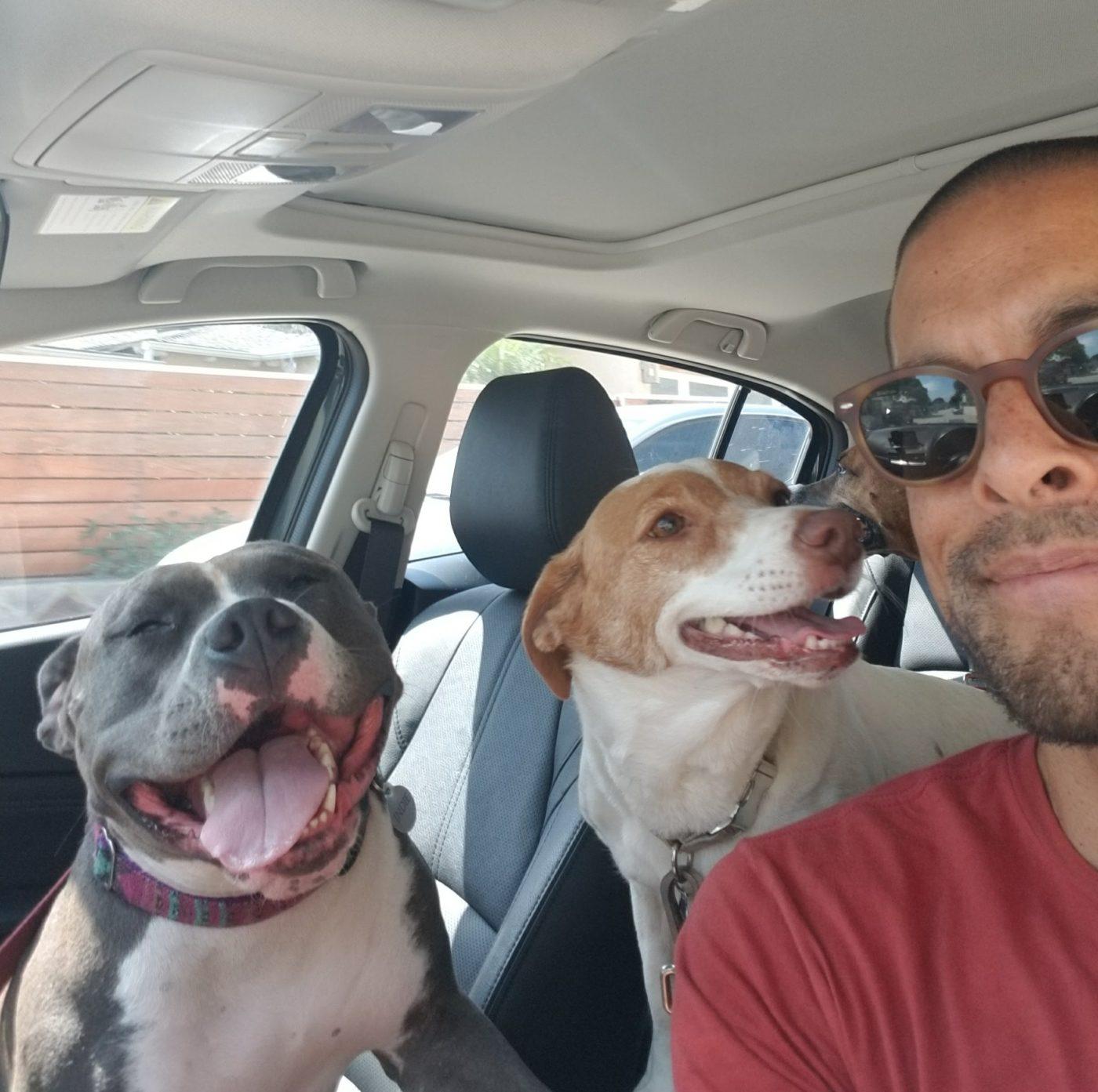 #dogpark, #mypitbull, Justin Scher, Bark Busters San Diego