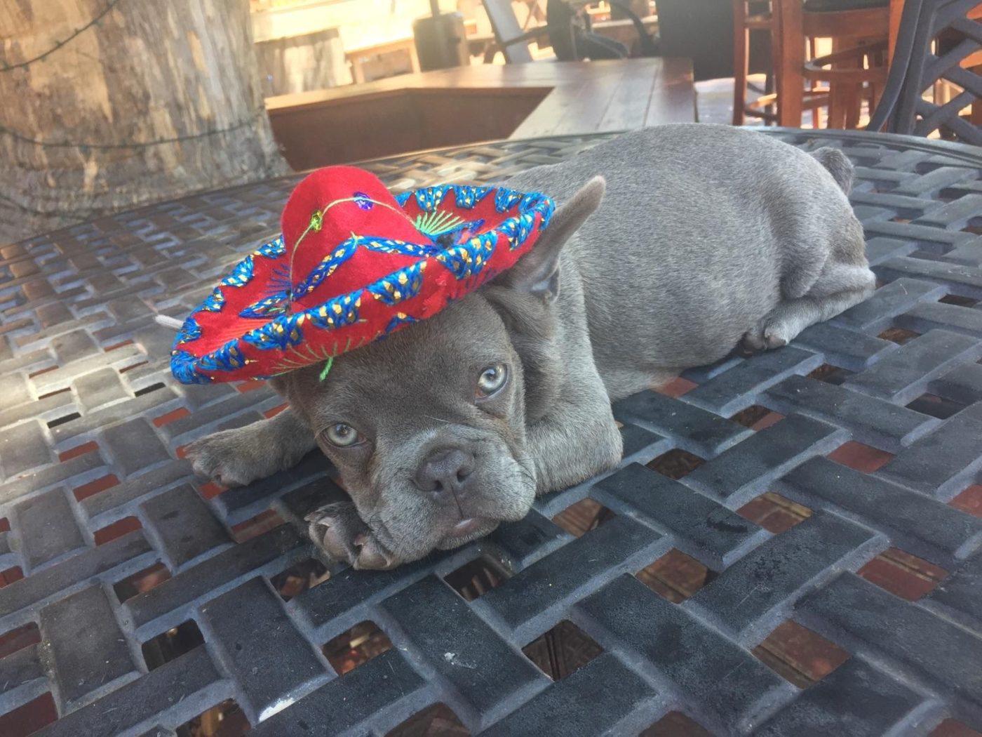 #cindodemayodog, #barkbustershomedogtraining, #sandiegodogtraining