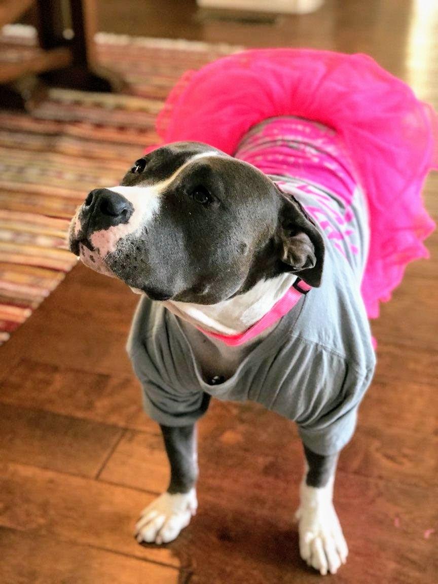 #fashiondog #femaledog, #bestdogtrainingtechniques