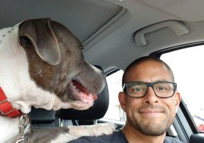 #dogincar, #dogcarride, #Barkbusters #companiondogtraining