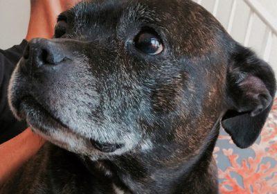 #bestdogtrainingprogram, #dogtrainingnearme