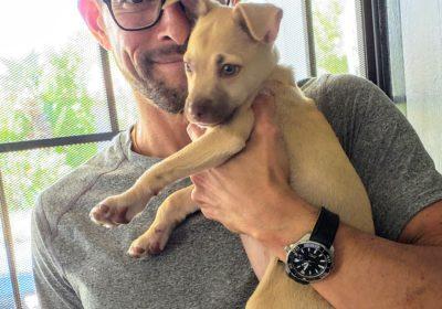 #pitbullpuppytraining, #housebreakingapup, #prodigypuppy, #barkbusterspuppytraining