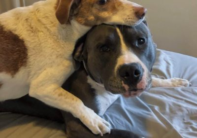 #packanimals, #cuddlingdogs, #pittiesarethebest,