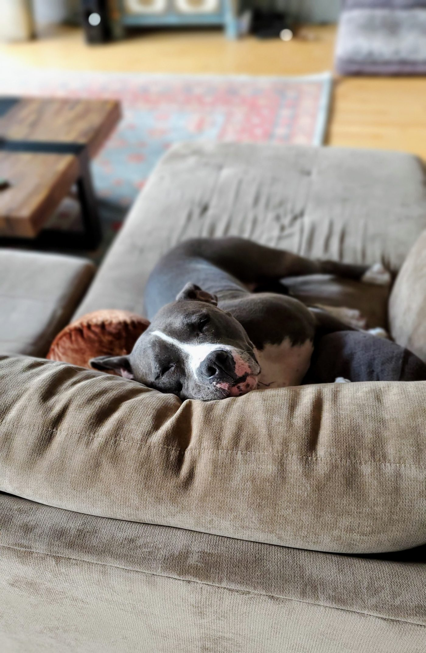 #ilovepitties, #speakdogbarkbusters, #nodogonthecouch, #greenzone