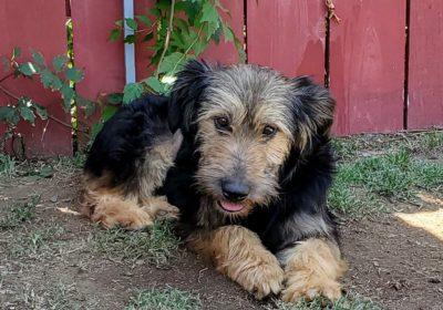 #rescuedog, #adoptdontshop, #mexicanstreetdog, #prodigypuppy, #theanimalpad