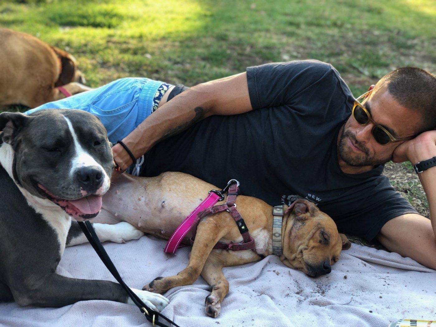 #rescuedog, #fosterdog, #mexicanstreetdog, #onthemend