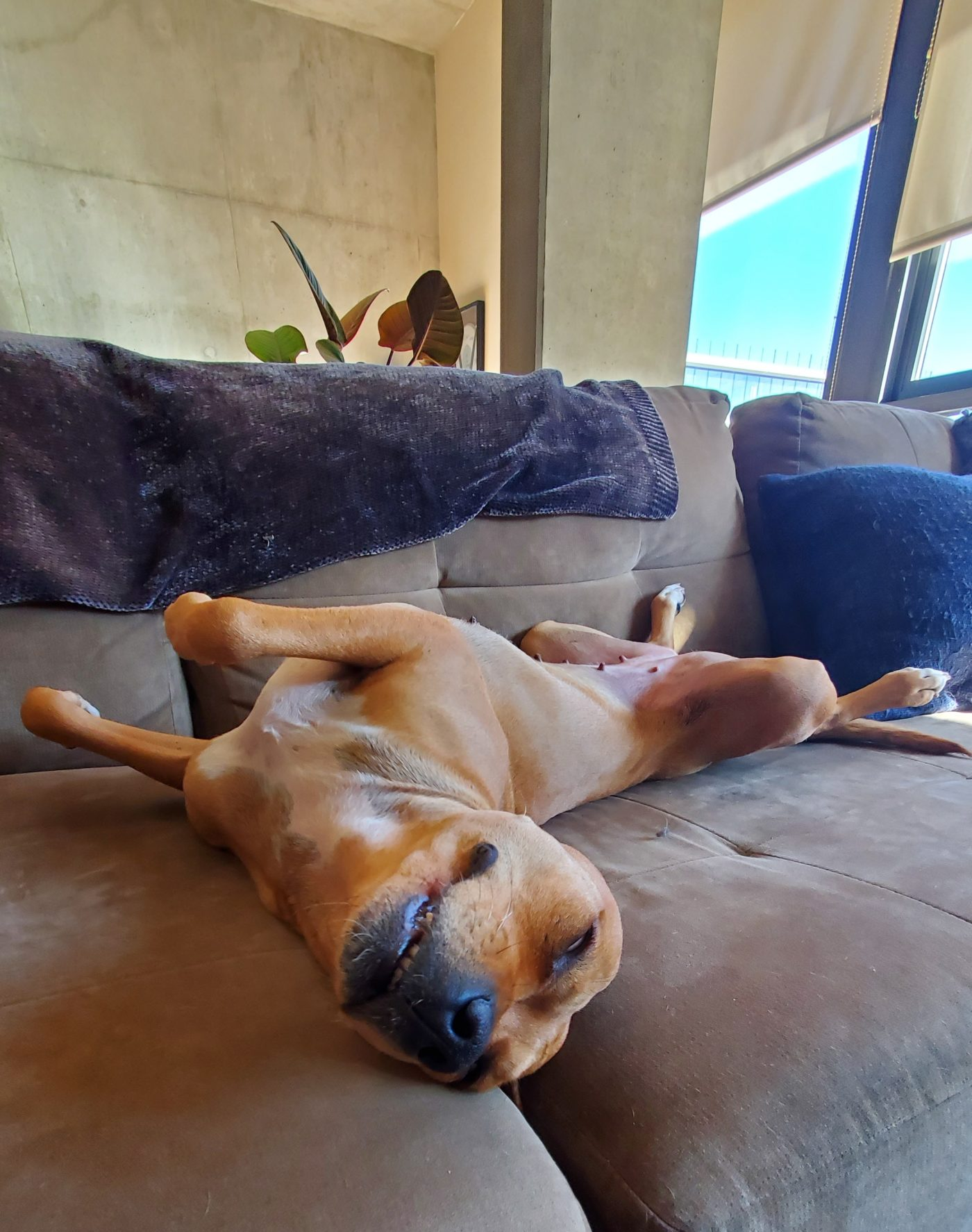 #thestruggleisreal, #nodogsonthecouch, #mexicanstreetdog, #rescuedfromthestreets