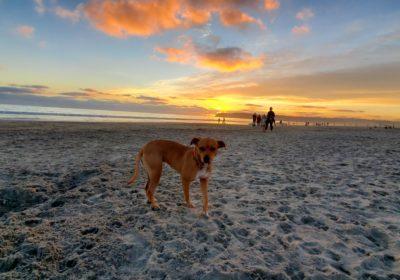 #coronadodogbeach, #sunsetsonthebeach, #happy2020, #dogsincoronado, #offleashtraining