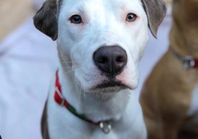 #fosterdog, #dogsofmexico, #theanimalpad, #barkbusterssandiego, #dogbehavioraltherapy