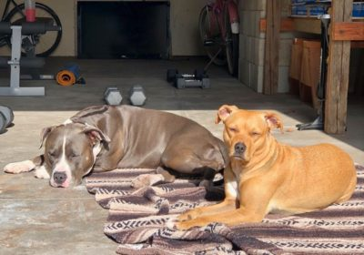 #selfquarentine, #bondedpitties, #pitbullsrule, #dogtrainingsandiego, #barkbusterssandiego