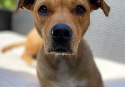 #mexicanstreetdogs, #bajarescue, #barkbustershomedogtraining, #cutestdogever, #dogtrainingsandiego