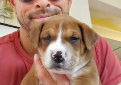 #pitbullpuppy, #housebreaking, #adoptapuppy, #sandiegodogtraining, #sandiegodogtrainer
