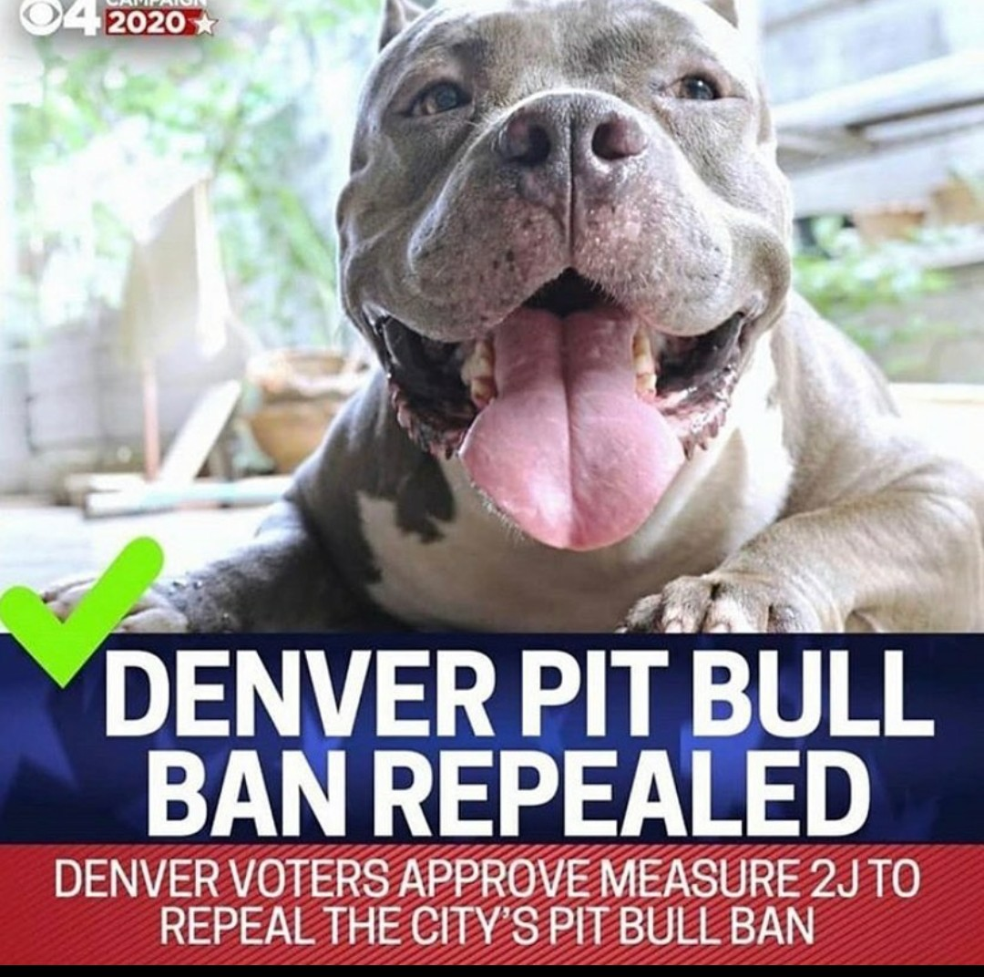 #denverpitbullbanrepealed, #finally, #sandiegobarkbusters, #dogtrainersandiego, #dogtrainingsandiego, #dogbehaviorist, #ilovepitties, #ilovepitbulls