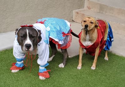 #covidhalloween, #dogsincostume, #barkbusterssandiego, #staysafe, #happydogsincostume
