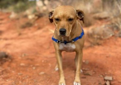 #rescuedog, #mexicanstreetdog, #livingthebestlife, #waggwalker, #dogbehaviorist