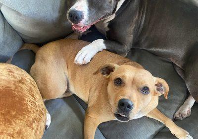 #nodogsonthecouchrule, #cuddlydogs, #sandiegodogtrainer, #dogbehavioraltherapy, #dogbehavioraltherapist